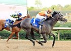 Oaklawn Star Win Willy Returns for Razorback