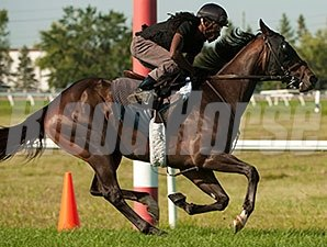 Smart Spree galloped at Woodbine Racetrack on 8/11/2014 in preparation for the Breeders' Stakes