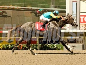 Zensational wins the 2009 Triple Bend.