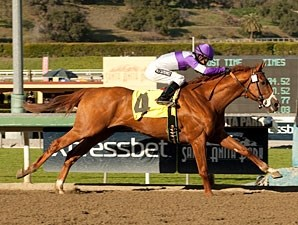 I Ll Have Another Horse Profile Bloodhorse