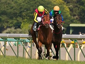 Son of Deep Impact Knocks Off Japanese Derby