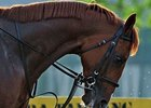 Casino Drive Scratched From Belmont