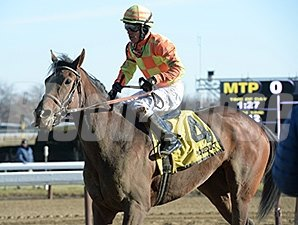 America wins the 2015 Affectionately Stakes.