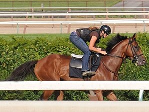 Big Brown Blows Out for Haskell on Turf