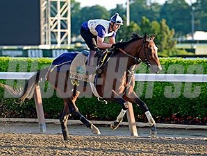 Tonalist jogs at Belmont Park on June 6, 2014