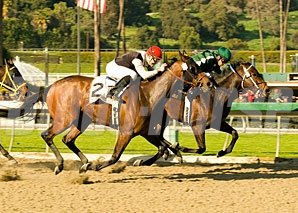 Intangaroo holds off Society Hostess to take the Santa Monica.