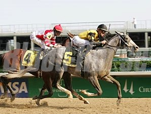 Macho Again powers to victory in the Derby Trial.