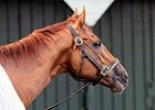 Wise Dan Completes Final Breeze for Woodbine