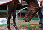 Preakness: Orb Gets a Bath Preakness Morning