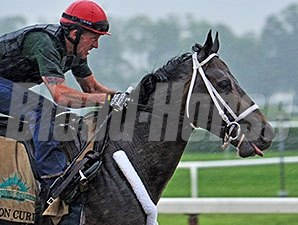 Ride On Curlin jogs at Belmont Park on June 5, 2014
