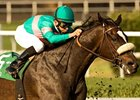 Zenyatta Appreciation Day at Hollywood Dec. 5