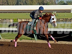 California Chrome - Los Alamitos Work, October 25, 2014.