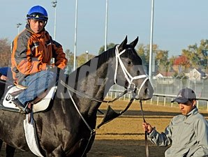 Pluck at Churchill Downs for the 2010 BC.