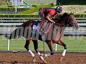 Conquest Harlanate preps for the 2014 Breeders' Cup.
