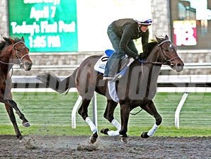 Golden Ticket works at Keeneland, April 7, 2012.