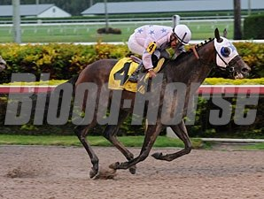 Black Diamond Cat wins the 2013 Housebuster.