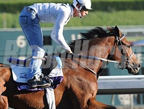 House Of Grace 2009 Breeders' Cup