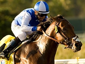 Rebel Prospect J P's Gusto Breezes at Oaklawn