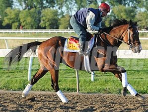 Hotep at Woodbine on July 2, 2010.