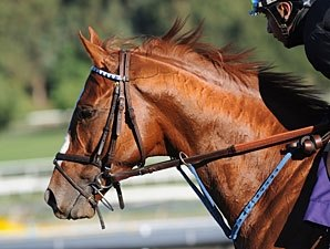 Summer Bird Hurt; Out of Japan Cup Dirt