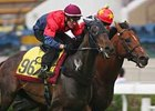 Good Ba Ba Horse of Year in Hong Kong