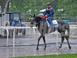 Frac Daddy - Belmont Park, June 7, 2013.