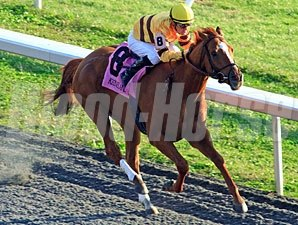 Wise Dan wins the 2011 Fayette Stakes.