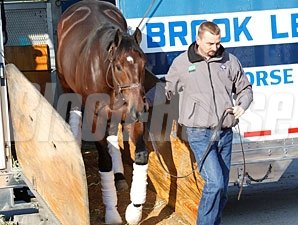 Stay Thristy arrives at Churchill Downs for the Breeders' Cup 10/24/2011.