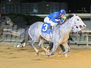 Fear the Facelift wins the 2013 President's Day Handicap.