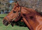 A Chenery Tells the Real Secretariat Story