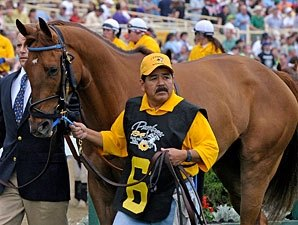 Multiple Stakes Winner Terrain Euthanized