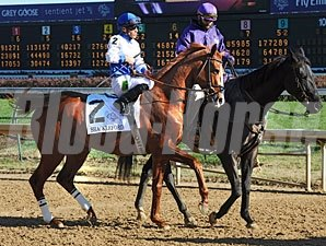 Shackleford in the post parade for the Breeders' Cup Dirt Mile.