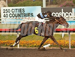 Shared Belief wins the 2013 CashCall Futurity.