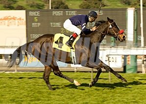 Trick's Pic flies to victory in the Tuzla Handicap in her first start for trainer Doug O'Neill.http://pictopia.com/perl/gal?provider_id=368&ptp_photo_id=3338959&ref=profiles