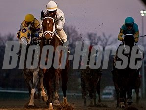 Brethren in 2010 Allowance race on November 27th.