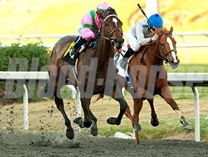 Charm the Maker wins the 2011 Sharp Cat