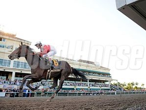 Orb wins the 2013 Florida Derby.