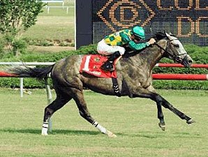 Virginia Derby: Paddy O'Prado the One to Beat