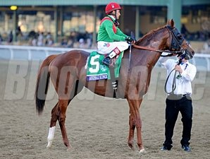 Animal Kingdom at the 2012 Breeders' Cup.