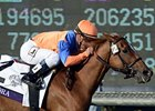 Zagora Named Champion Female Turf Horse