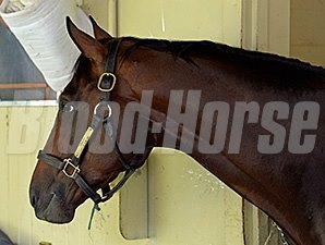 Tonalist after the Belmont Stakes.