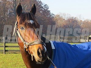 Paynter at Fair Hill.