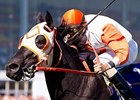 No Breeders' Cup Turf Sprint for Ben's Cat