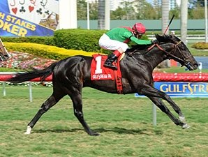 Howe Great Shows He'll Rate in Palm Beach Win