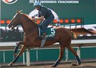 Hong Kong Races Heavy on Subplots