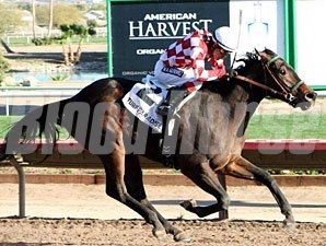 Taylors Deal wins the 2012 Turf Paradise Derby.