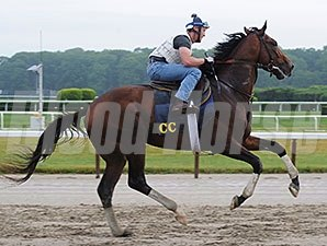 Tonalist jogs at Belmont Park July 3, 2014.