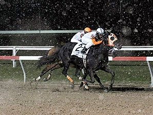 Ben's Cat Strikes for 19th Stakes Victory