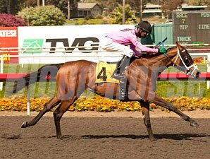 Miss Empire wins the 2012 Cinderella Stakes.