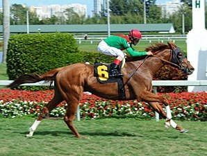 Stress Fracture Sidelines Animal Kingdom